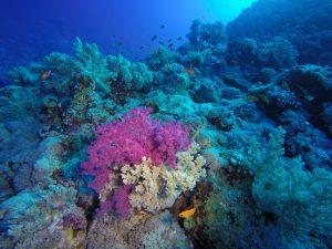 Pretty soft coral