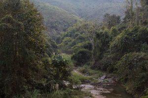 The wild and beautiful jungle scenes were stunning!