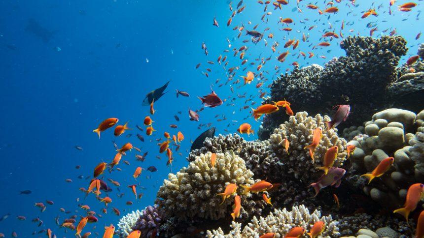 The reefs are boasting with life and diversity